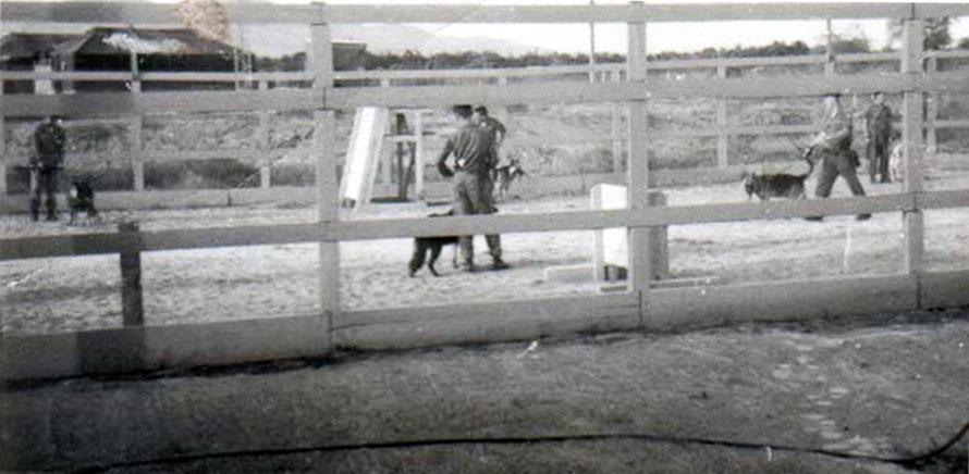 6. Da Nang AB, 366th SPS, K-9: Growl Pad Training and Exercise yard. Photo by: Lee Miller, Nov 1966.