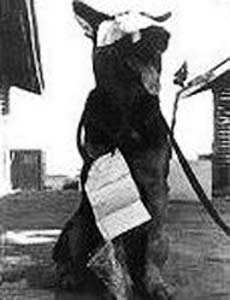 War Dog Nemo, WIA 4 Dec 1966, TSN. Photo Copyright by: Bill Trimble.