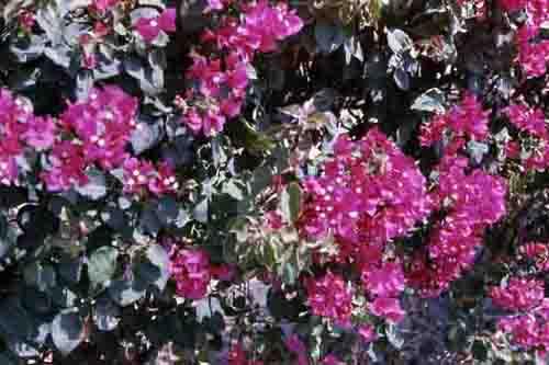 Vung Tau marketplace flowers. MSgt Summerfield: 06
